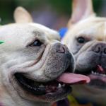 Cuidados especiais para curtir o carnaval com seus pets!