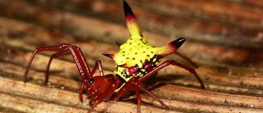 OMG | O Pikachu existe sim e ele é uma aranha!