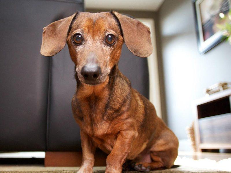 DICA DE LIVRO | O menino que falava a língua dos cães!