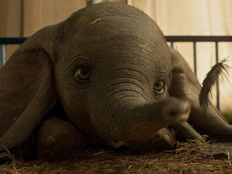 DUMBO   O nascimento do pequeno elefante em novo trailer!