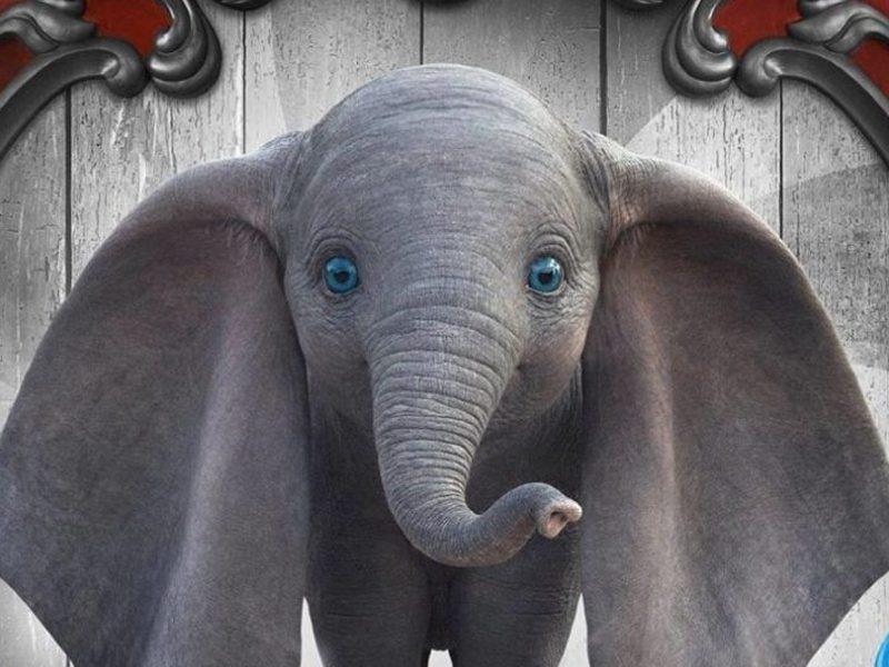 DUMBO   Filme estreia como sucesso na Ingresso.com!