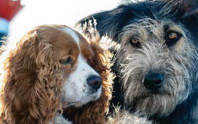 DISNEY + | 'A Dama e o Vagabundo' ganha nova imagem promocional!